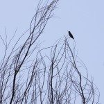 AnnieLane - Birding 016