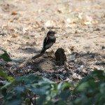 AnnieLane - Birding 074
