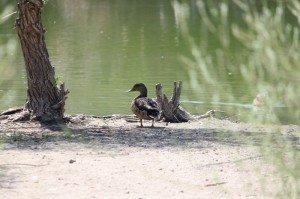 AnnieLane - Birding 123