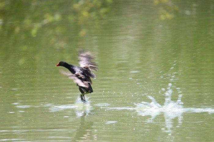 AnnieLane - Birding 127