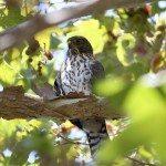 AnnieLane - Birding 189