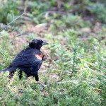 AnnieLane - Birding 225