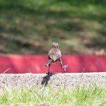 AnnieLane - Birding 282