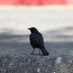 AnnieLane - Birding 288