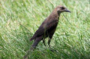 AnnieLane - Birding 332