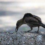 AnnieLane - Birding 341