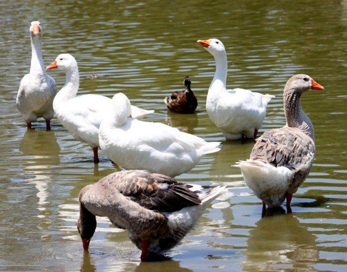 AnnieLane - Birding 364