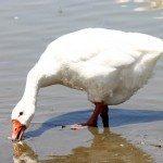 AnnieLane - Birding 370