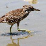 AnnieLane - Birding 385