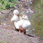 AnnieLane - Birding 410