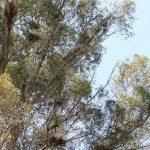 AnnieLane - Birding 418
