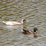 AnnieLane - Birding 442