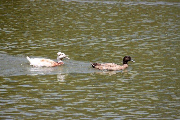 AnnieLane - Birding 451