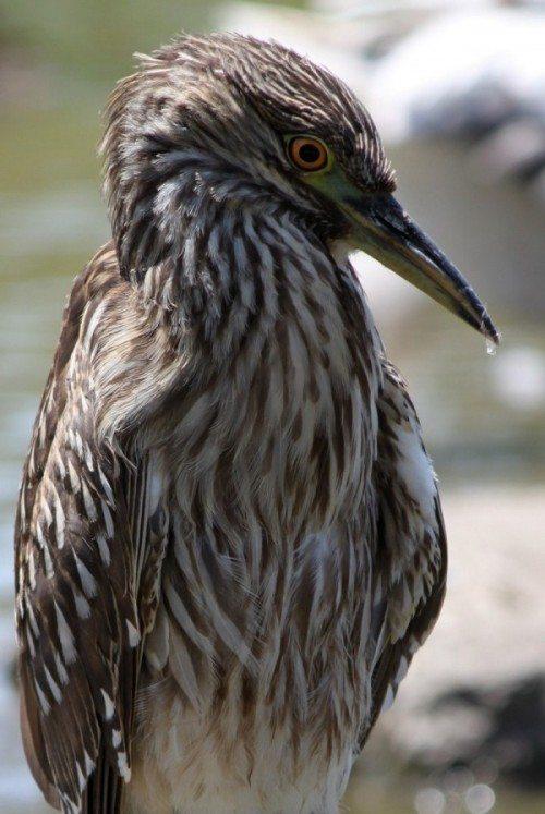 AnnieLane - Birding 577
