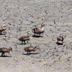 AnnieLane - Birding 678