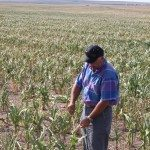 sdfp drought corn