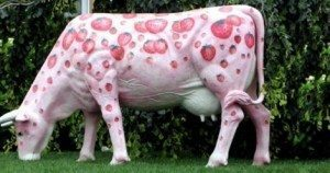 sdfp pink cow