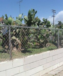 fence nopales