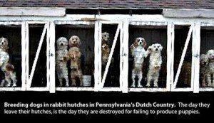 Prison dogs