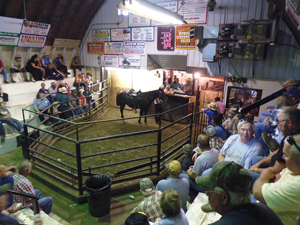 North Dakota horse auction.
