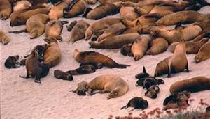 Sea lion beach