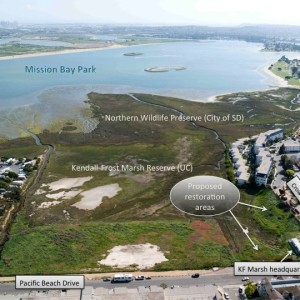 A Small Restoration Is a Big Deal in Mission Bay