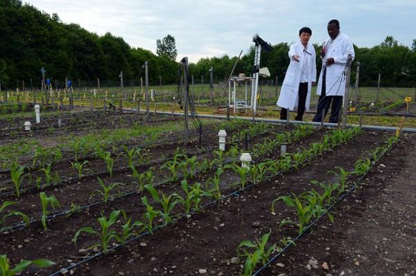 plant farm organic
