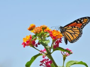 Thanks to Conservation Efforts, the 'Butterfly Highway' Saw a Ton More Traffic This Year