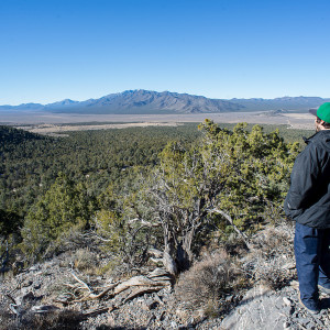 Pinyon-Juniper Forests: An Ancient Vision Disturbed
