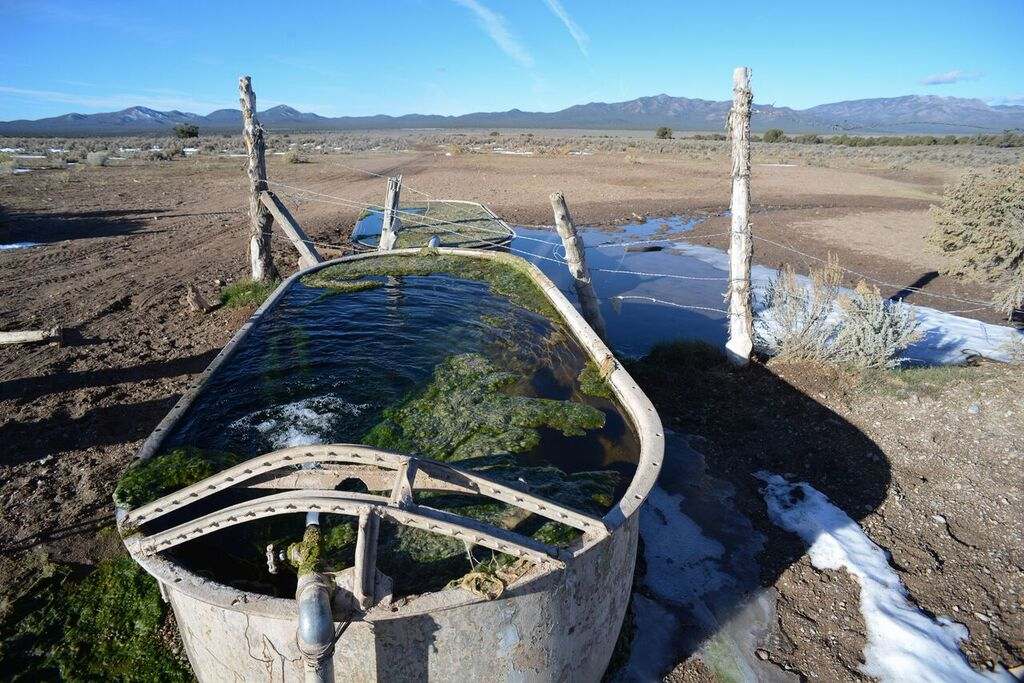 Cattle watering station near Cave Valley, NV