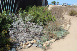 Binational Garden