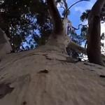 Geo-Poetic Spaces: Tree Killers