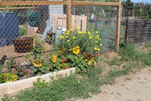 Tijuana River Valley Community Garden