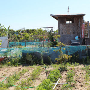 Gardening Builds Community in the Tijuana River Valley