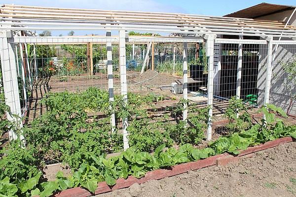 Plot at Tijuana River Valley Community Garden