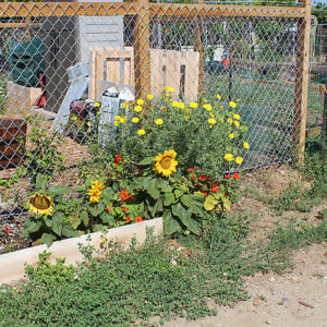 The Tijuana River Valley Community Garden