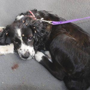 Baja Dog Rescue