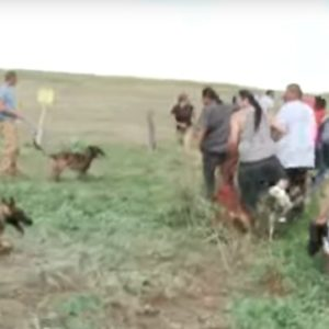 Dakota Access Pipeline Company Attacks Protesters With Dogs and Mace