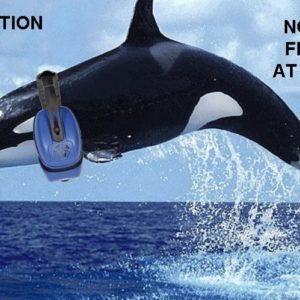 SeaWorld Ends Summertime Fireworks for Now